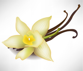 vanilla flower and sticks