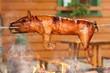 Grilled suckling pig
