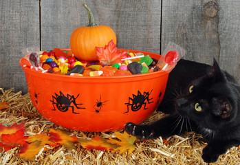 black cat protecting halloween candy