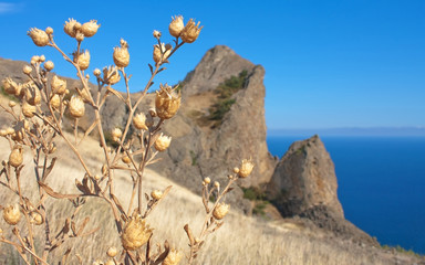 Dry grass on Karadag mountain. Black Sea, Crimea, Ukraine