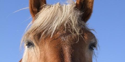 Pferd, italienische Perspektive