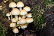 Leinwanddruck Bild - Herbstwald: Rindenschwämme und Baumwurzeln