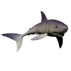 Mako Shark 01