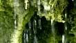 Naturquelle im Wald