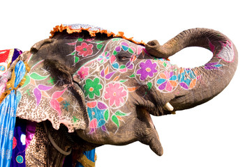 hand painted colorful elephant profile, Jaipur, Rajasthan,India