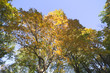 Autumn in trees.