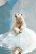 Polar bear in a zoo