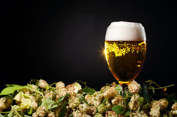 Single glass of beer with hop