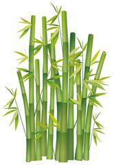 Cespuglio di bambù su bianco