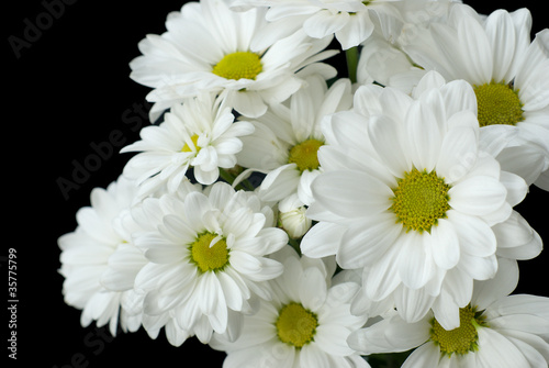 White flowers on a black background