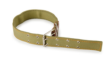 Dog collar isolated on the white background