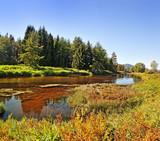 Fototapeta rzeka - las - Rzeka