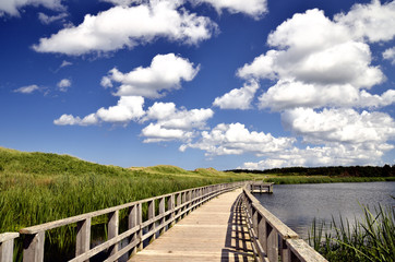 Seaside marsh boardwalk