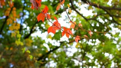 разноцветные ветки дикого винограда - осень