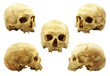 Human skulls isolated on white - multipicture