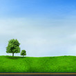 Tree on green field with road and blue sky