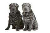 Fototapete Zwei - Paar - Haustiere