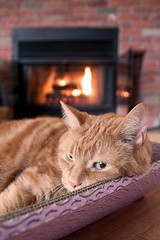 Cat by the fireplace