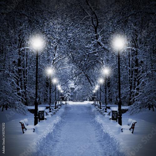 Park at Christmas - 35792312