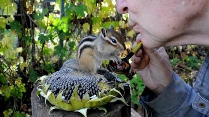 Поцелуи с бурундуком (chipmunk)