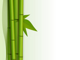 bamboo background with empty space on the right