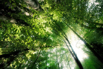 Lumière du soleil brillant dans la forêt
