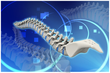 Digital illustration of human spine in colour background