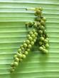 Poivre vert