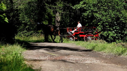 red charabanc on a forest road