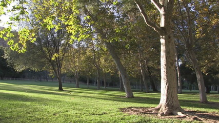 Peaceful park scene with gentle breeze moving leaves.