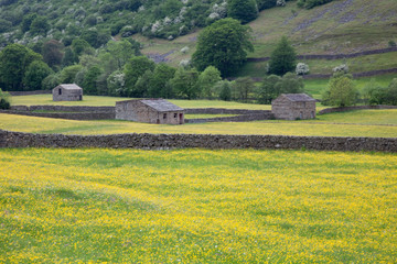 Stone barns & wildflower meadows at Muker in Swaledale