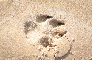 close up of dog footprint on the sand