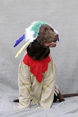 Labrador als Indianer verkleidet