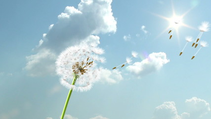 Dandelion, 3d animation on sky background