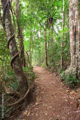 szlak-lasow-deszczowych-tablelands-australia