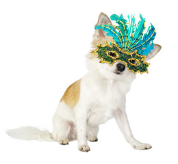 chihuahua dog with bright carnival mask isolated on white