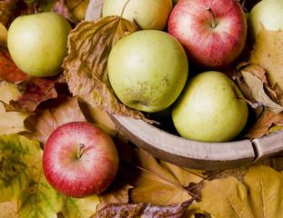 красные и зеленые яблоки на фоне желтых листьев