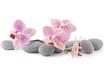 Fototapeten,aroma,aromatherapie,blühen,blühen