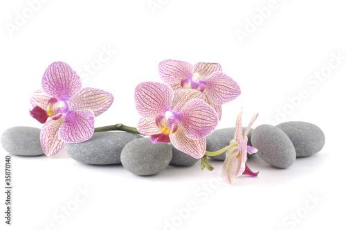 wciaz-zycie-z-rozowa-orchidea-z-popielatymi-kamieniami