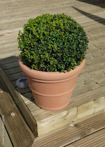 buis boule en pot photo libre de droits sur la banque d 39 images image 35878740. Black Bedroom Furniture Sets. Home Design Ideas