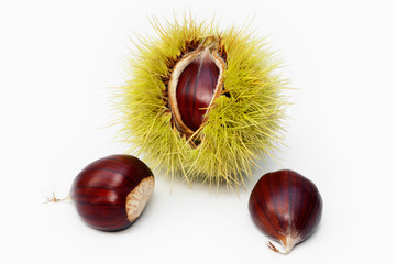 sweet chestnut fruit half open and nuts on white background