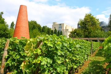 Vignes de Bercy