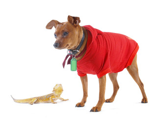 Lizard and Dog