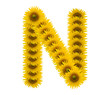 alphabet N, sunflower isolated on white background