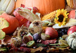 Compilation of various fruits, sunflowers and pumpkins