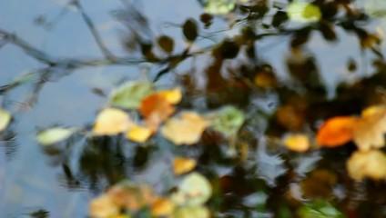 Осенние желтые листья на воде