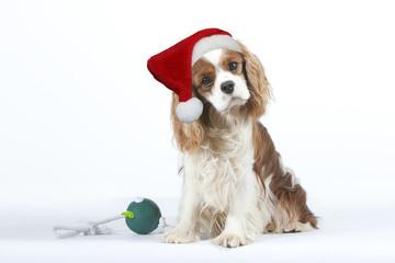 chien avec le bonnet de Père Noël et son cadeau