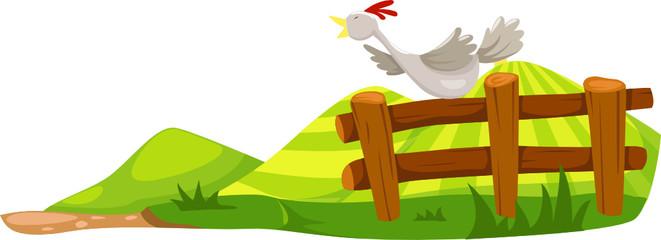 Chicken on fence