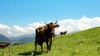 Cow on grazing land