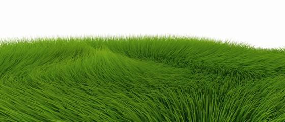 Grünes Fell vor weissem Hintergrund 02
